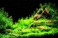 Green beautiful planted tropical freshwater aquarium Royalty Free Stock Photo