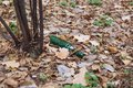 Green beer bottle on the ground in the forest Royalty Free Stock Photo