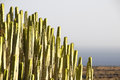 Green big cactus in the desert on a sunny day Royalty Free Stock Photography