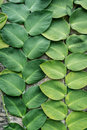 Green big leaves old wall decorated in garden background Royalty Free Stock Photo