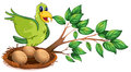 A green bird at the branch of a tree Royalty Free Stock Photo