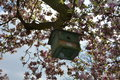 Green bird house hangs on the blossoming magnolia tree