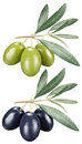 Green and black olives with leaves on a white background. Royalty Free Stock Photo