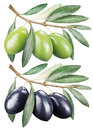 Green and black olives with leaves. Royalty Free Stock Photo