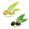 Green and black olives stylized symbol isolated illustration Stock Photos