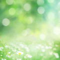 Green blurred background with flowers Stock Image