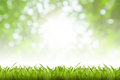 Green blurry lights natural texture background Royalty Free Stock Photos