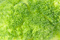 Green boiled broccoli food background taken closeup as Royalty Free Stock Photography
