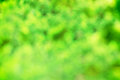 Green bokeh abstract leaf background Royalty Free Stock Photography