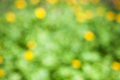 Green bokeh background abstract light Royalty Free Stock Photography