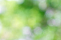 Green Bokeh Background.