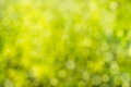 Green bokeh background. Element of design. Abstract eco green bl Royalty Free Stock Photo