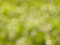 Green bokeh lights in sunny day