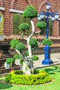 Green bonsai tree in thai temple Royalty Free Stock Photo