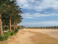 Green border of the beach palm trees in Africa Royalty Free Stock Photo