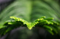 Green branch image of a with shallow depth of field Stock Photography