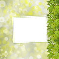 Green branch of  tree and paper frame on abstract background Royalty Free Stock Photo