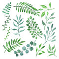 Green branches and leaves set