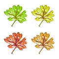 Green brown yellow red maple leaf isolated on white background Royalty Free Stock Photos