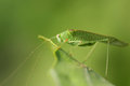 Green bug insects from latin insectum a calque of greek ἔντομον éntomon cut into sections are a class of invertebrates Stock Photography
