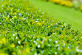 Green Bush And Lawn Background