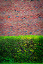 Green bushes at an brown wall Royalty Free Stock Photo