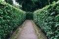 Green bushes labyrinth, hedge maze Royalty Free Stock Photo