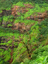 Green bushes on mountainside Royalty Free Stock Photography