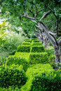 Green Bushes & Shrubs in Garden Royalty Free Stock Photo