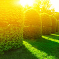 Green bushes in sun light at spring park Royalty Free Stock Photo