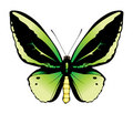 Green butterfly illustration Royalty Free Stock Photo