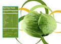 Green cabbage nutrition facts creative design for with label Royalty Free Stock Images