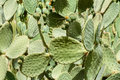 Green Cactus Fields Royalty Free Stock Photo