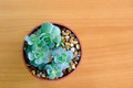 Green cactus in flower pot top view Royalty Free Stock Photo