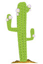 Green cactus vector illustration background Royalty Free Stock Photography