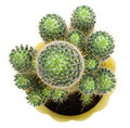 Green cactus, view from above Royalty Free Stock Photo