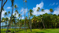 Green caribbean field of palm trees on the shore of a islands in the grenadines Stock Photography