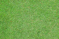 Green carpet grass well maintained in home garden or commercial center Stock Photo