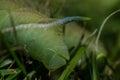 green caterpillar detail Royalty Free Stock Photo