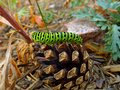 Green caterpillar of swallowtail Royalty Free Stock Photo