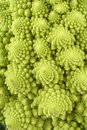 Green cauliflower Stock Images