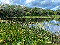 Green Cay Wetlands Royalty Free Stock Photo