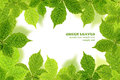 Green chestnut leaves border Royalty Free Stock Photo