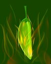 Green chili pepper in flame Stock Photo
