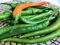 Green and one Orange chili peppers Royalty Free Stock Photo