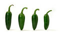 Green chillies panorama creative image of assorted sized with soft shadows against a white background copy space Royalty Free Stock Photo