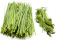 Green chives and dill Royalty Free Stock Images