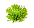 Green chrysanthemum isolated on white background Royalty Free Stock Photography