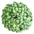 Green chrysanthemum on a white isolated background with clipping path. For design. Close-up. Royalty Free Stock Photo