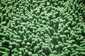 Green cleaning feet doormat Royalty Free Stock Photo